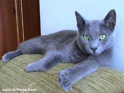 Russian Boy Cat Names